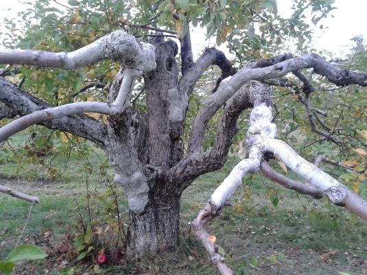 L'arbre de Sève
