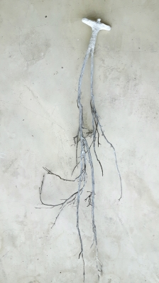 Âme-oiseau no 4 (2017) (70 x 10 x 6 cm)